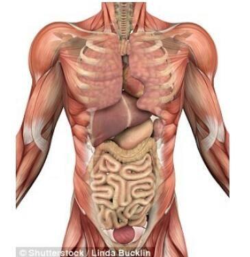 科学家发现新器官在什么地方?是什么新器官