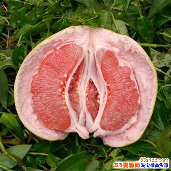出售三红蜜柚苗 三红蜜柚新品种|田园种植三红蜜柚壮苗
