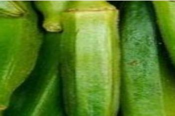 推�]3��大棚蔬菜�N植最��X�目成本低利��高