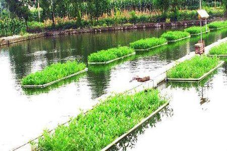 介绍几个新型水产养殖模式 十分有发展潜力