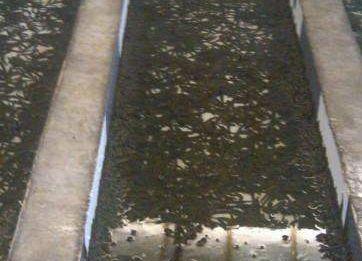 从成本和利润分析一下蚂蟥养殖前景怎么样