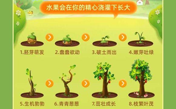 淘宝芭芭农场种水果需要多少肥料