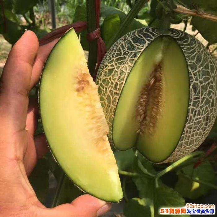 水果微商一手货源 果园产地基地直发